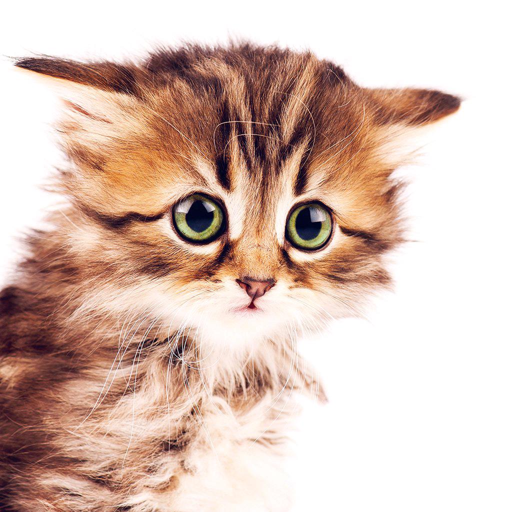 Le chaton d'un fanzine par mois